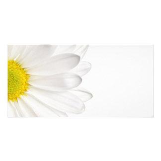 White Daisy Flower Background Customized Daisies Custom Photo Card