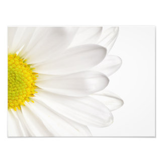 White Daisy Flower Background Customized Daisies Art Photo