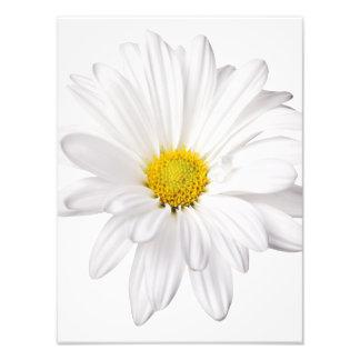 White Daisy Flower Background Customized Daisies Photographic Print