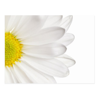 White Daisy Flower Background Customized Daisies Postcards