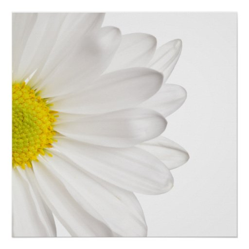 White Daisy Flower Background Customized Daisies Posters