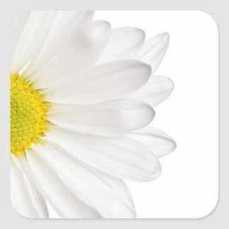 White Daisy Flower Background Customized Daisies Square Sticker