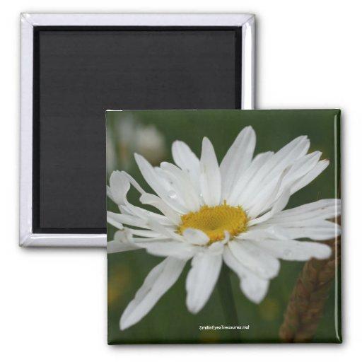 White Daisy Flower Photo Magnet