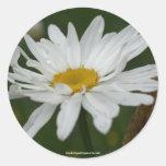 White Daisy Flower Photo Sticker
