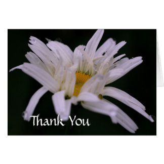 White Daisy Flower Photography Thank You Card
