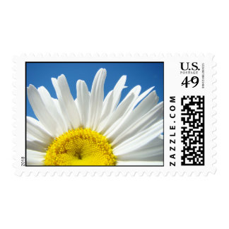 White Daisy Flower postage stamps Blue Sky floral
