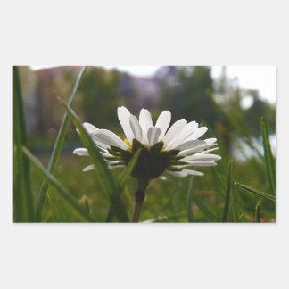 White Daisy Flower Stickers