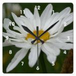 White Daisy Flower With Raindrops Nature Clocks