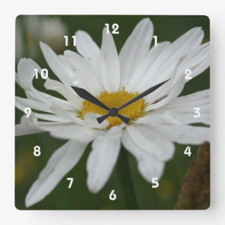 White Daisy Flower With Raindrops Nature Square Wall Clock