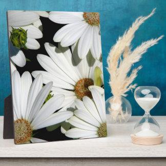 White Daisy Flowers Plaque