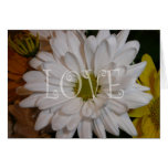 White Daisy Greeting Cards