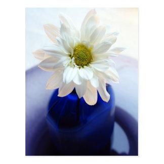 White Daisy in Cobalt Vase Postcard