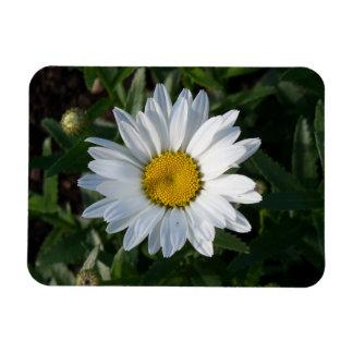 White Daisy Magnet
