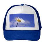 White Daisy on Blue Sky Hats