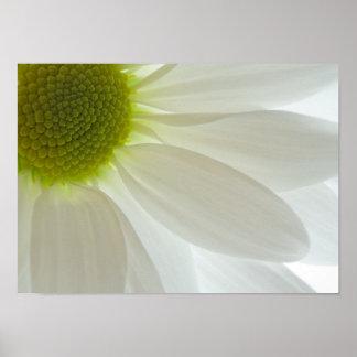 White Daisy Petals Poster