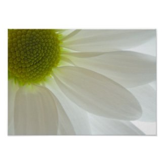 White Daisy Petals Poster Print