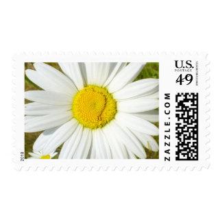 White Daisy Postage Stamp