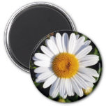 white daisy refrigerator magnets