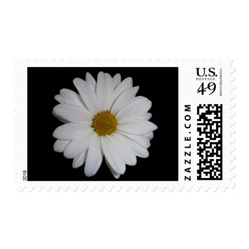 White Daisy Stamps