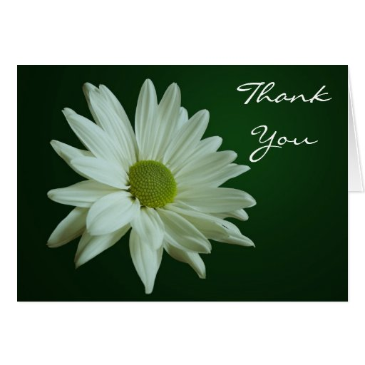 White Daisy Thank You Card