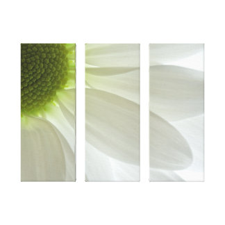 White Daisy Three Panel Wrapped Canvas Print