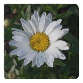 White Daisy Trivets