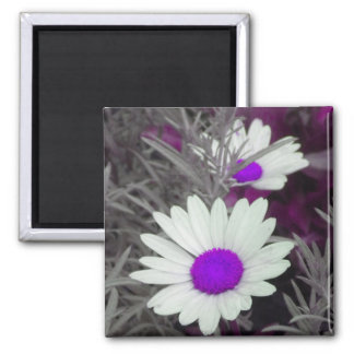 White Daisy (w Purple) magnet