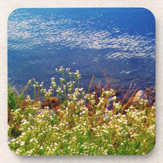 White daisy wildflowers blue water coasters