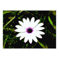 White Daisy with Pink Center in Grass Photograph Card