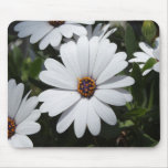 White Daisy's in Bloom Mousepads