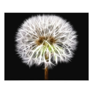 White Dandelion Flower Plant Flyer