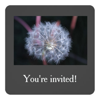 white dandelion seeds birthday party invitations. card