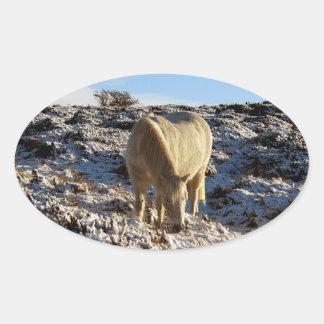 White dartmoor pony grazeing in snow oval sticker