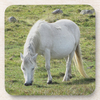 White Dartmoor Pony Grazeing Summer Coaster