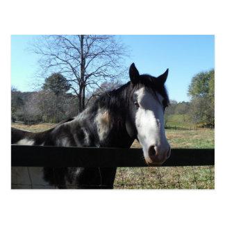 &White de Brown, caballo pintado, cielo azul brill Tarjeta Postal