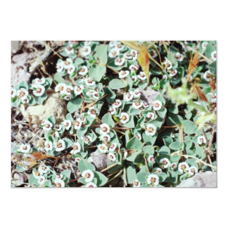 white Death Valley - wildflowers flowers Personalized Invite