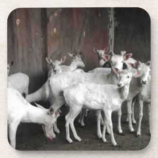 White Deer Beverage Coaster