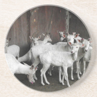 White Deer Coaster