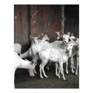 White Deer Letterhead
