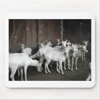 White Deer Mouse Pad
