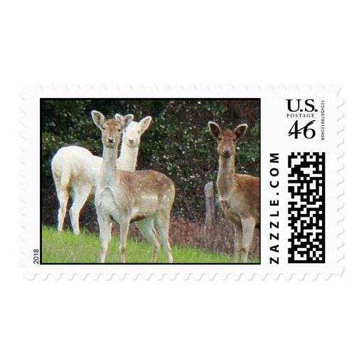 White Deer Postage