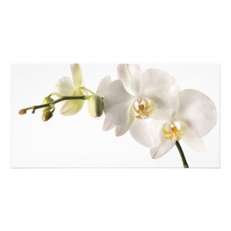 White Dendrobium Orchid Flower Spray Floral Blank Card