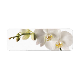 White Dendrobium Orchid Flower Spray Floral Blank Label