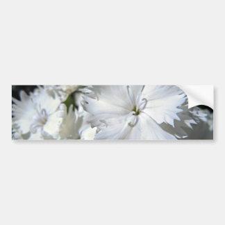 White Dianthus Bumper Sticker