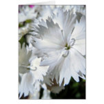 White Dianthus Greeting Card
