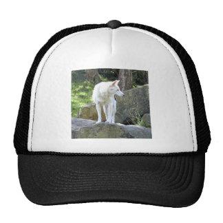 White Dingo Trucker Hat