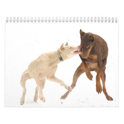 White Doberman Calendar