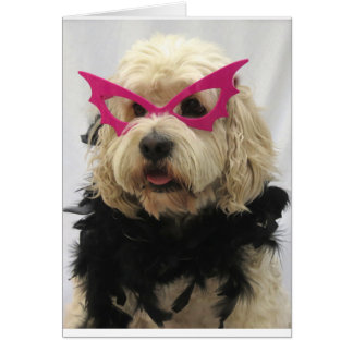 white dog,costume, funny,humor,glasses on dog, greeting card