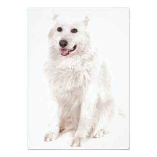 WHITE DOG DIGITAL REALISM PETS HAPPY LOGO CAUSES A CARD