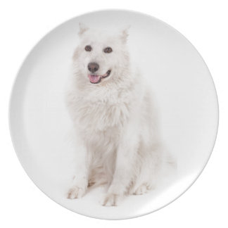 WHITE DOG DIGITAL REALISM PETS HAPPY LOGO CAUSES A PARTY PLATES
